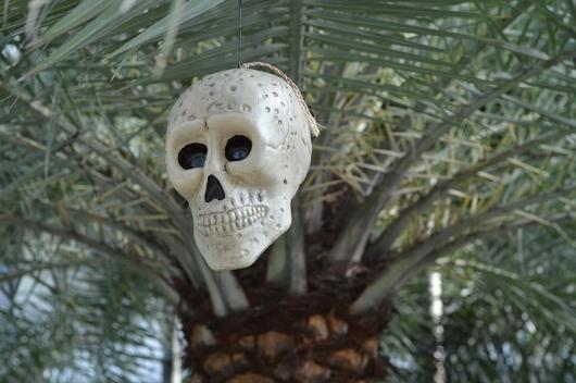 halloween skull acacia estate