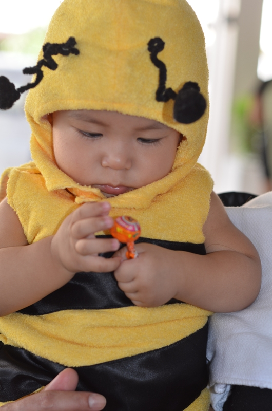 A baby bee enjoying the lollipop