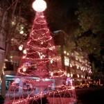 palm christmas tree