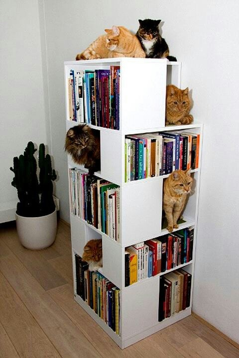 Modular Bookshelf Pet Furniture