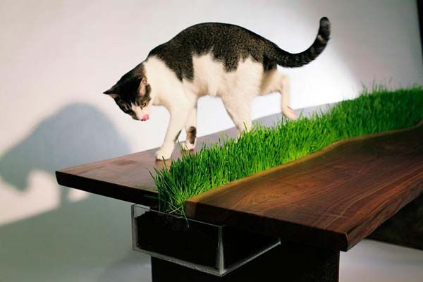 cat grass table