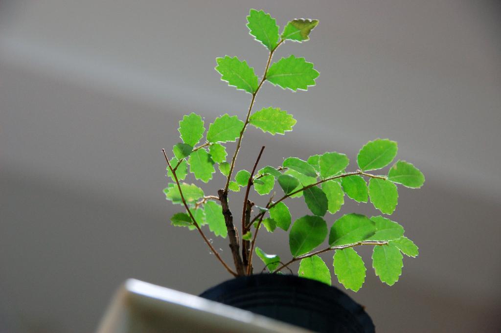 benefits of condo indoor plants