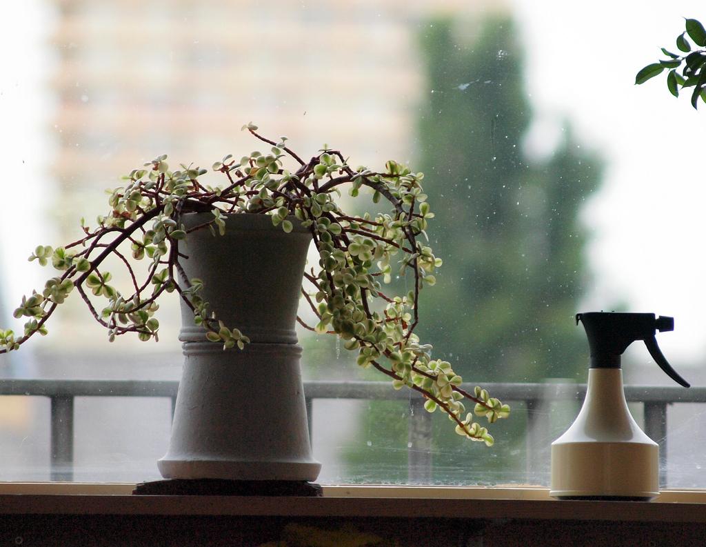 condo plants provide shade in your condo