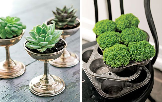 Serve Plants Through Ice Cream Dishes and Muffin Tins