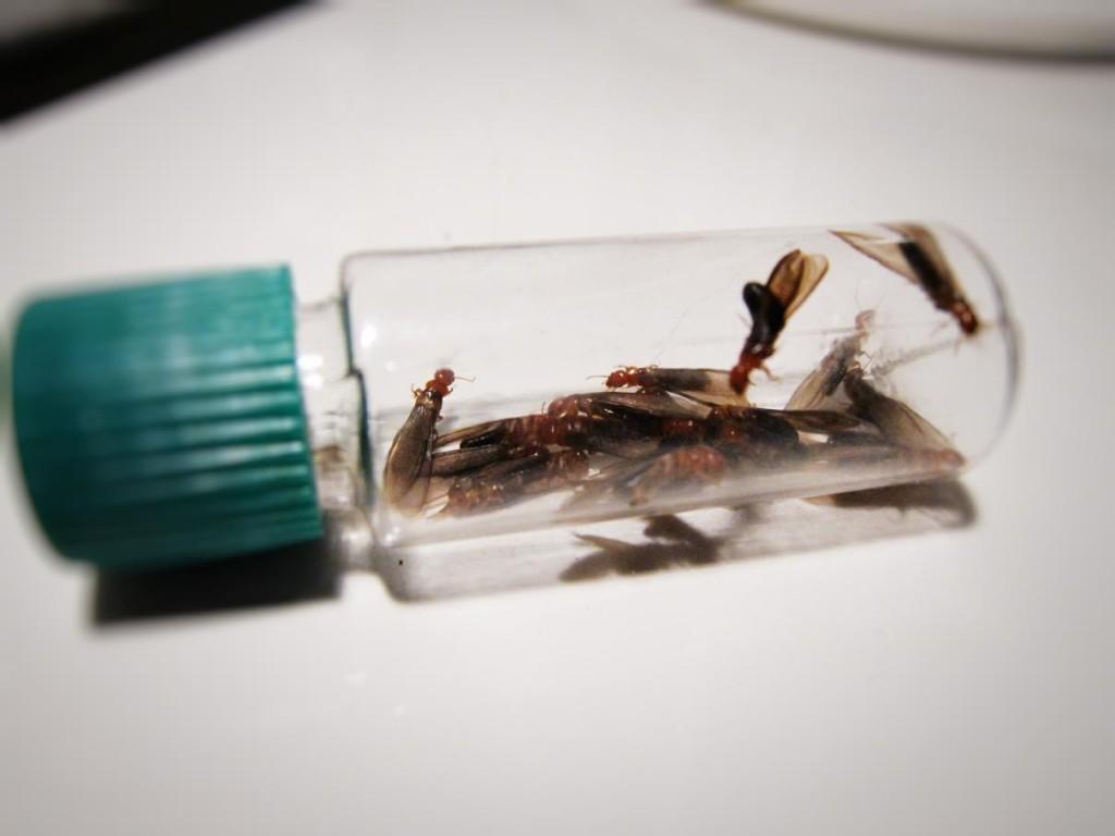 condo pest and termites