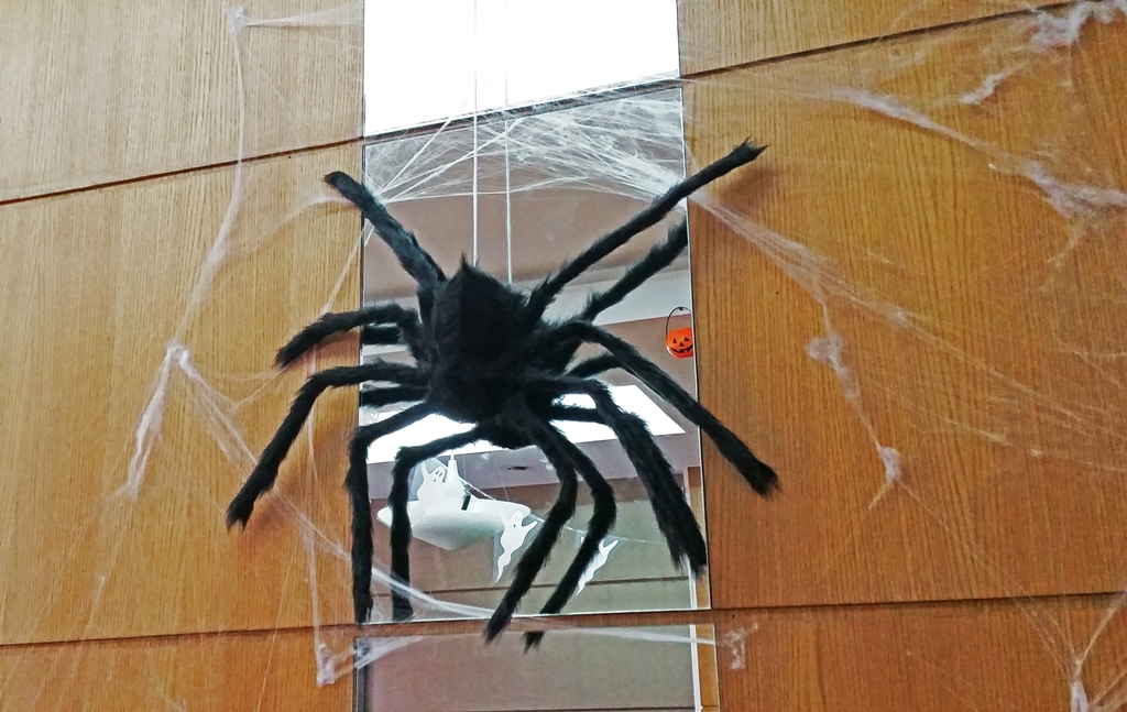 spider design for halloween1