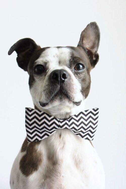 aztec print bowtie for condo pets