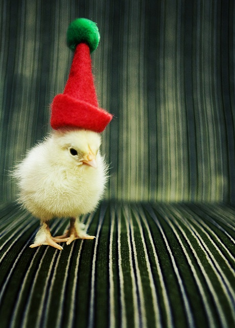 chick costume
