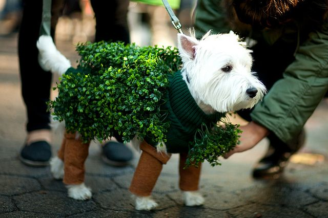 Dress Up Your Favorite Pets This Christmas