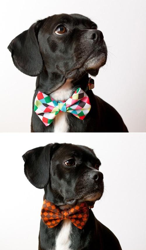 condo pets bow tie pattern