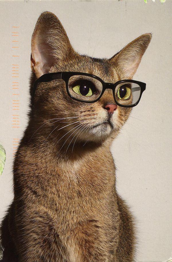 eyeglasses condo pets