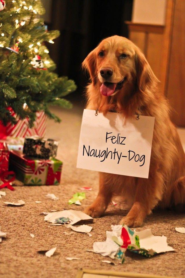 naughty dog costume