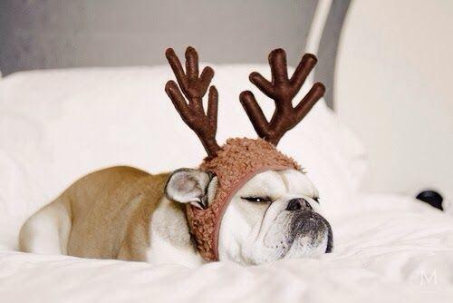 reindeer hat costume for pets