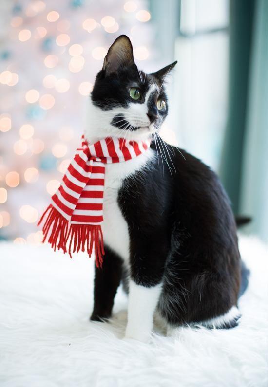 scarf condo pets