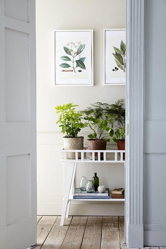 entrance condo plants