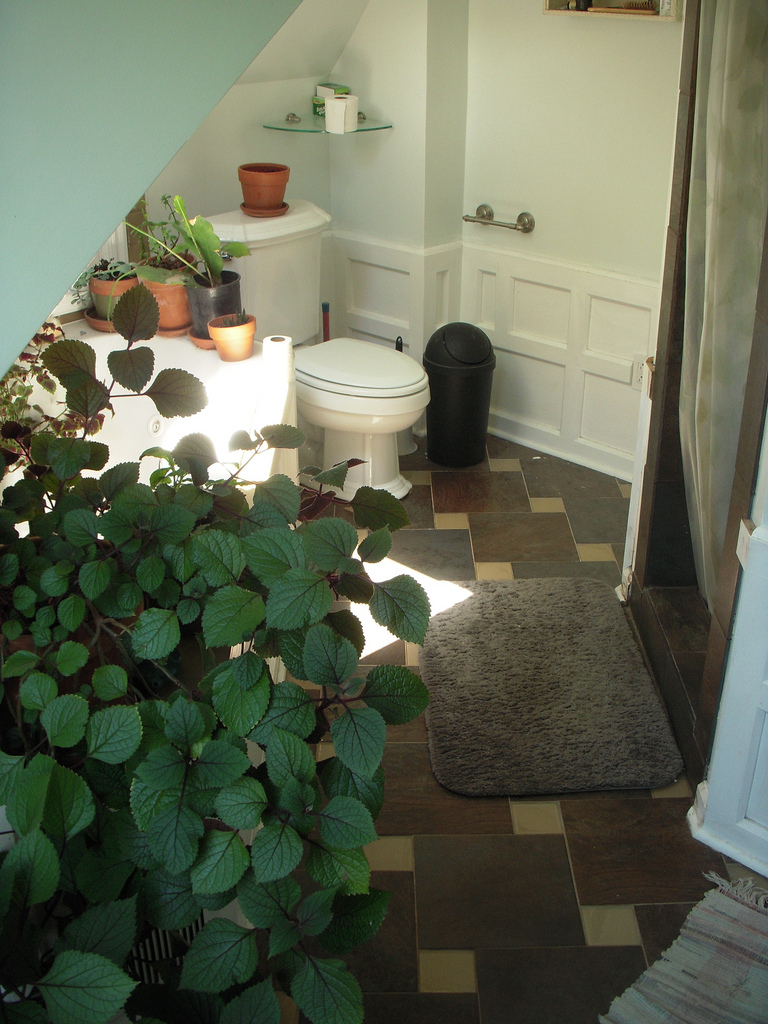 indoor plants bathroom