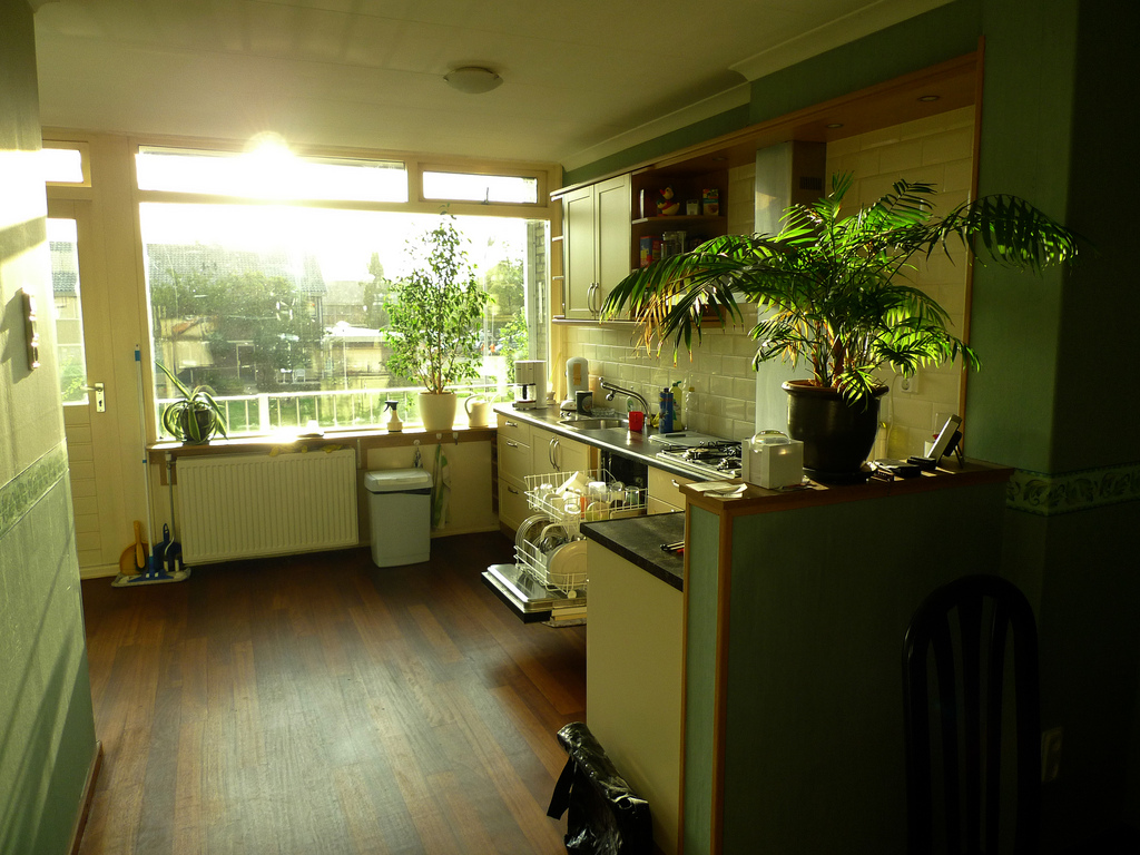 indoor plants kitchen