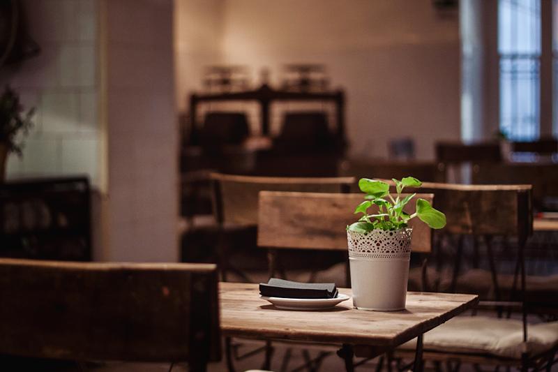 indoor plants living room