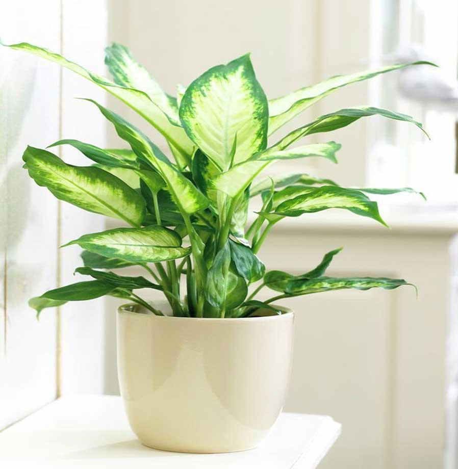 11 perfect plants for your condo bathroom. Black Bedroom Furniture Sets. Home Design Ideas