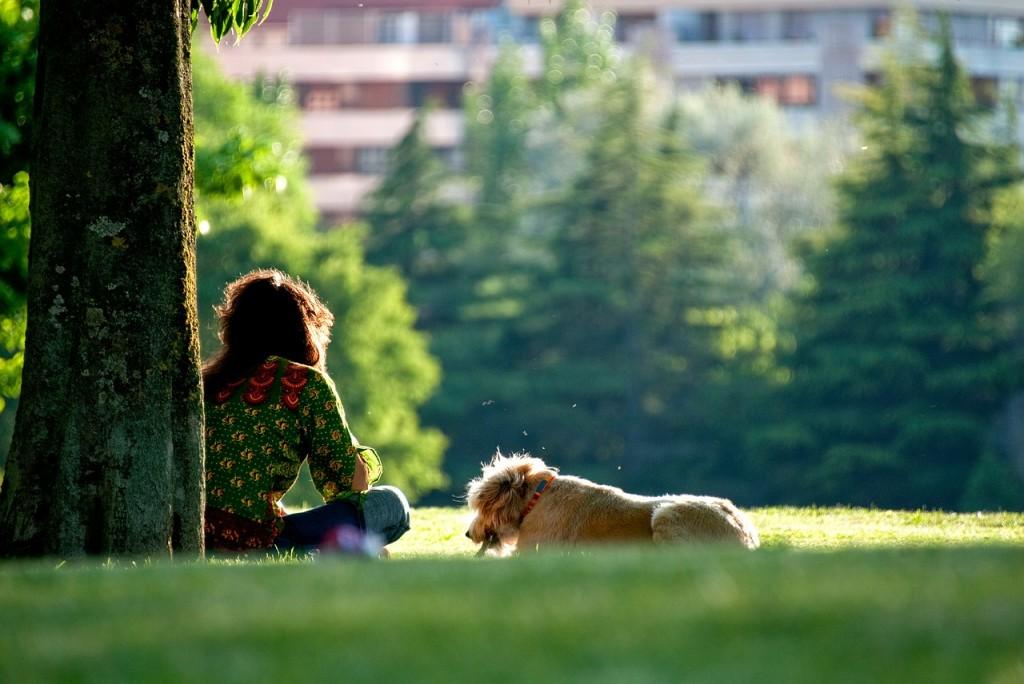 Acclimate Your Apartment Pet