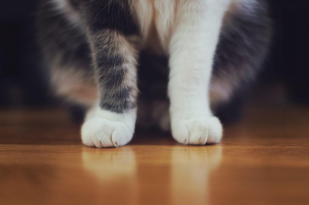 Establishing Pet-Free Zones