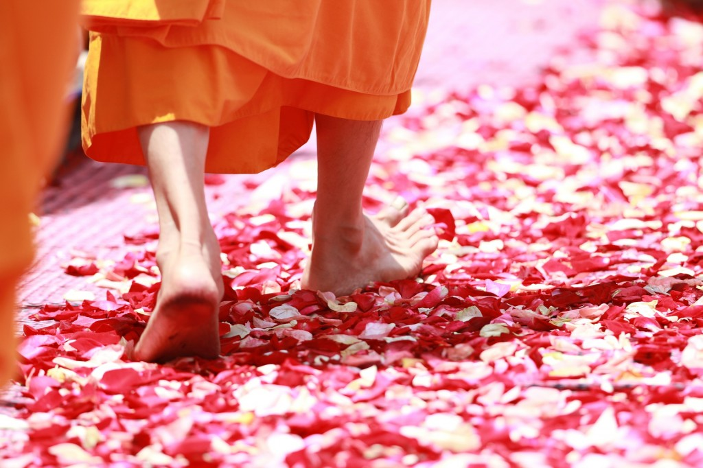 Monk Walking on Rose Petals