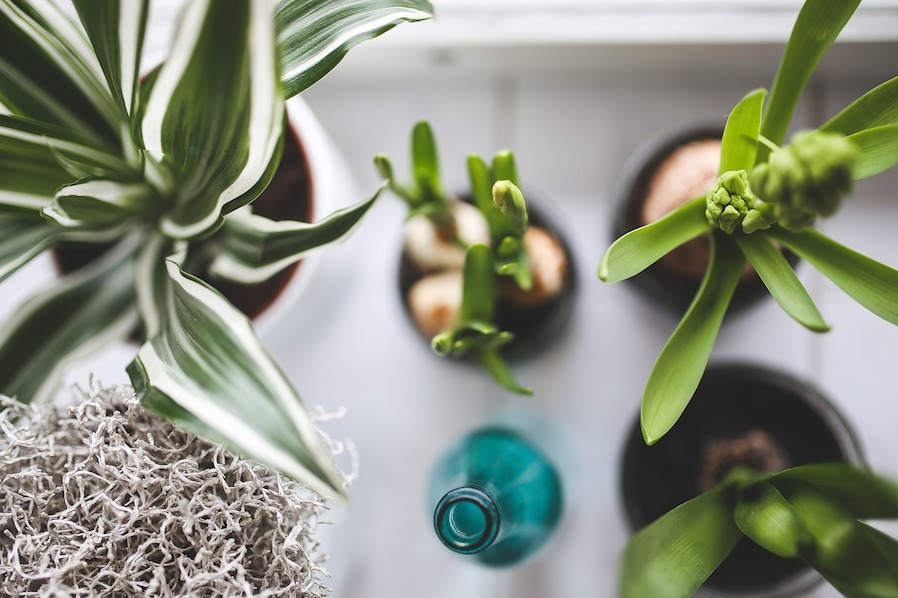 Purify the Air with Plants