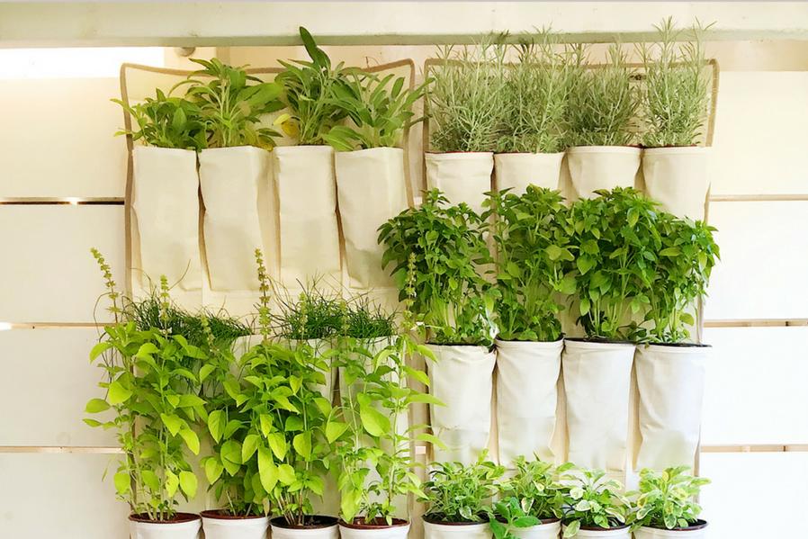enchanting vertical herbal garden