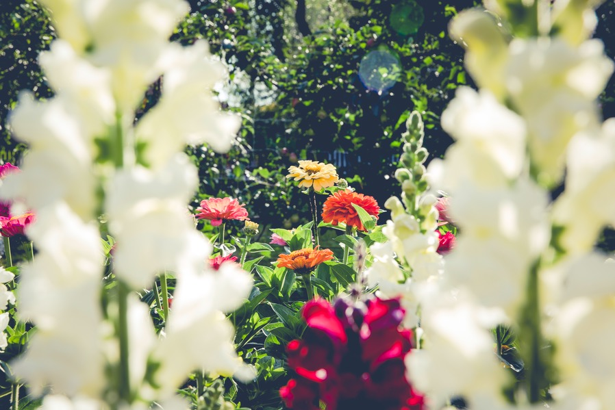 Baguio Garden Plants