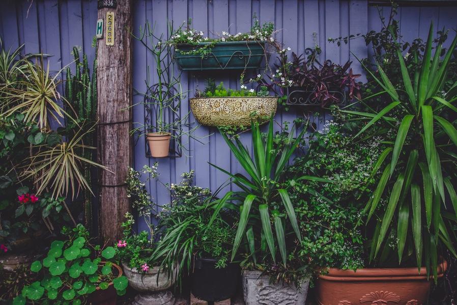 Gardening Arrange Plants