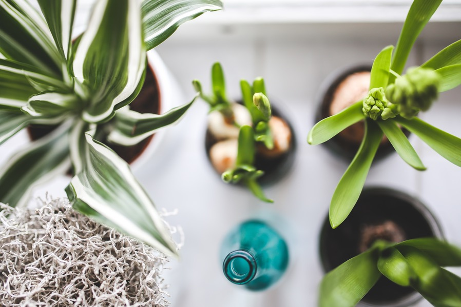 Indoor Gardening Tips Every Condo Tenant Should Know