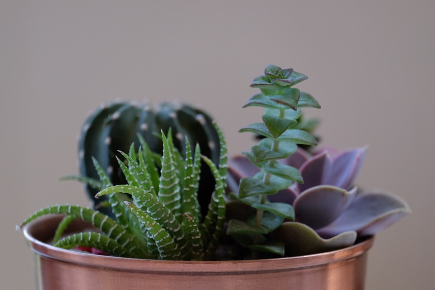 Gardening Space-saving Succulents