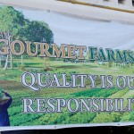 IN PHOTOS: Siena Park Residences kids visit Gourmet Farms