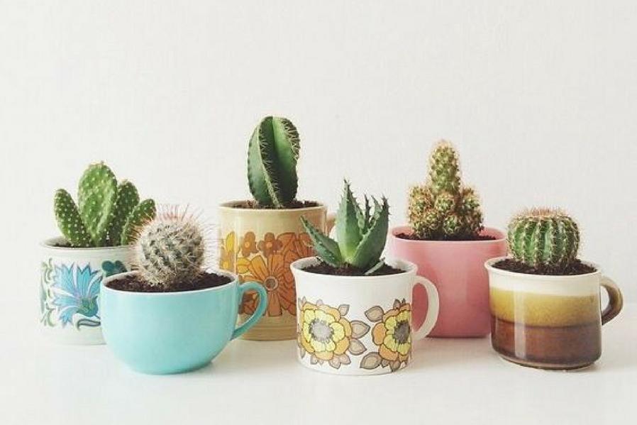 Summer Condo Indoor Plants