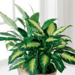 6 Plants That Can Cool Down Your Condo This Summer