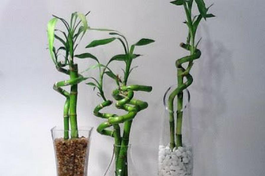 Summer Heat Insulating Bamboo
