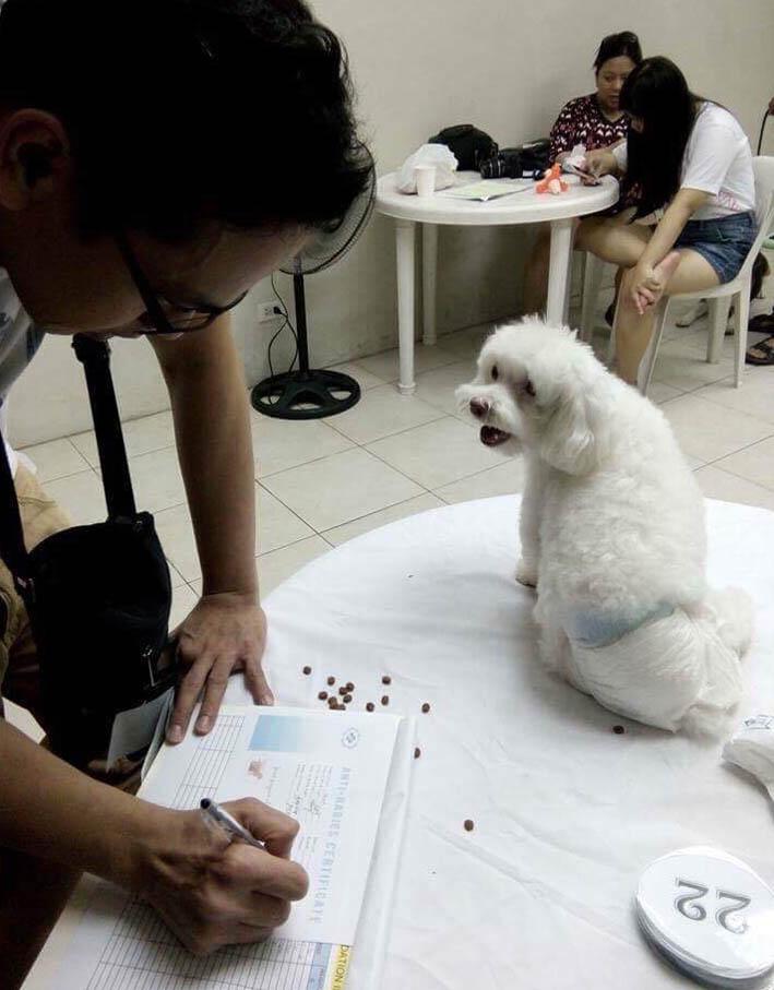 pet parenting dog white