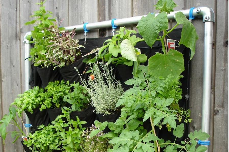 Condo Vertical Garden