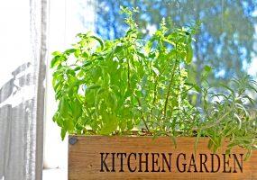Condo Window Garden