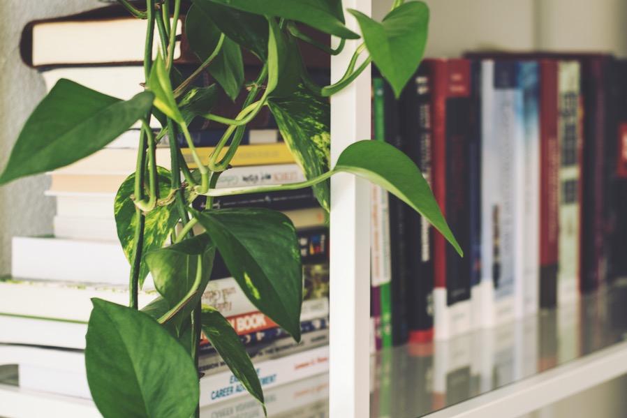 Rainy Condo Hacks Mini Library