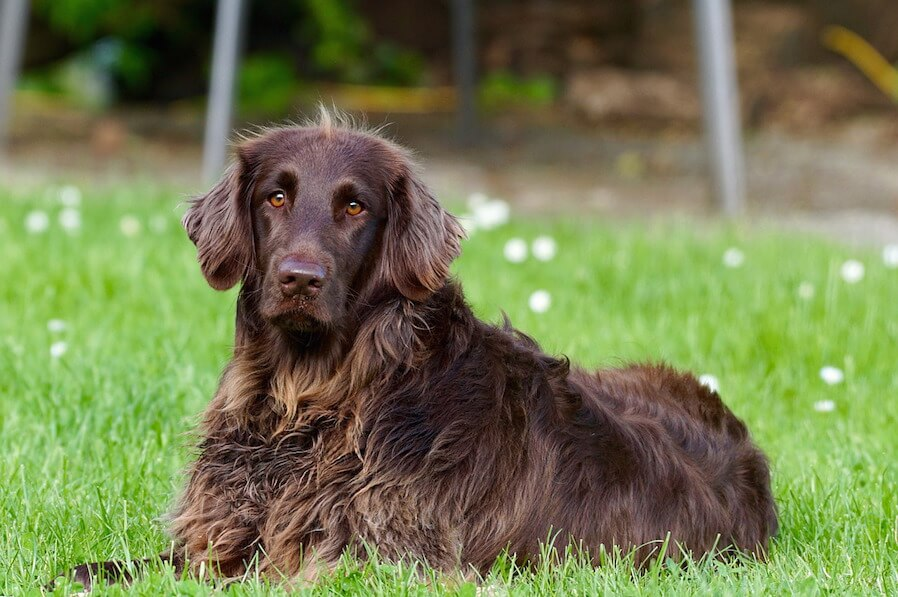 Condo Pet Ensure your Safety (1)