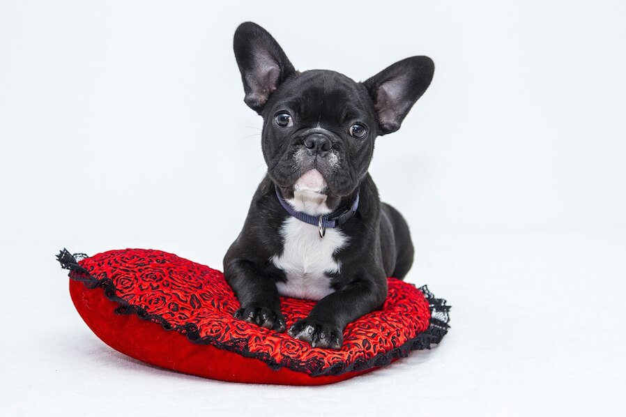 Condo Pet Transition Period (1)