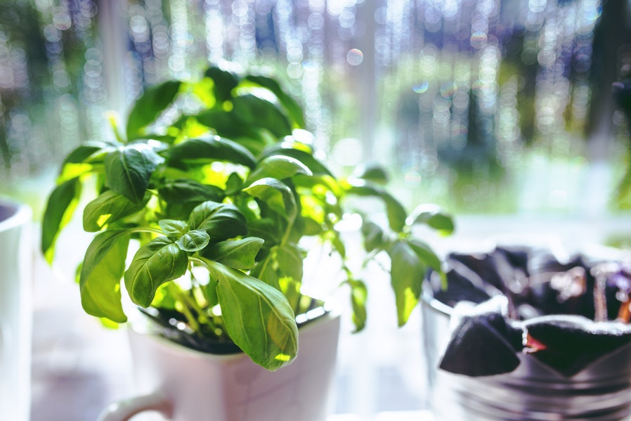 Plant Setups Aromatic Herb Garden