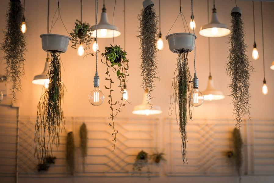 Plant Setups Indoor Hanging Garden