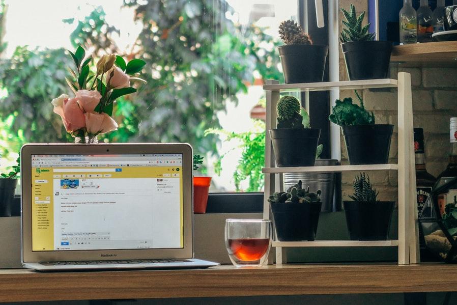 Succulent Plant Setups by the :Window