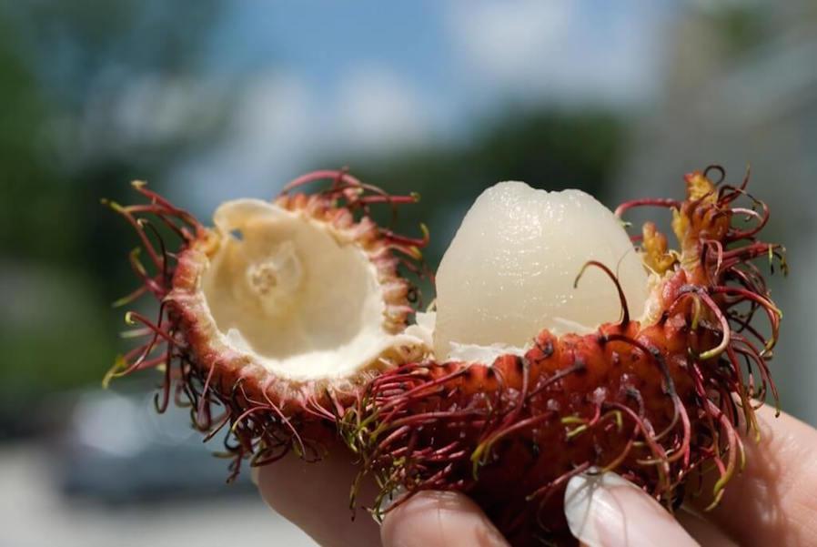 Condo Fruit Festival Buko-rambutan Dessert