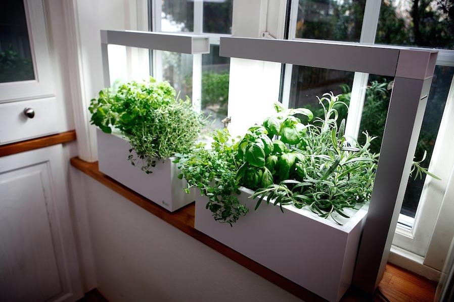 Condo Kitchen Remodeling Indoor Garden