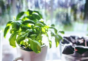 Hardy Indoor Plants for the Metro-Bound Condo Resident