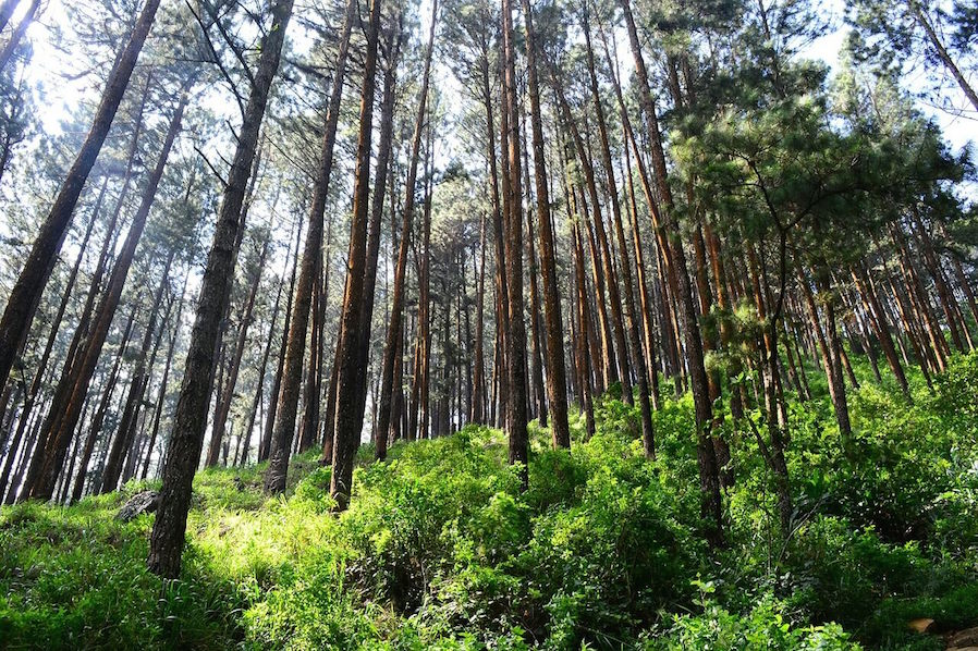 Outlook Baguio Healthy Dose of Nature