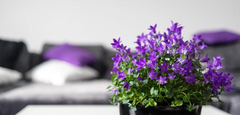 violet interior room design